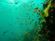 Jardin de poissons Photos stock