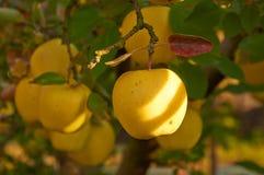 Jardin de pomme d'automne Photos stock