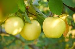 Jardin de pomme d'automne Image libre de droits