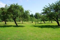 Jardin de pommier Photo libre de droits