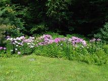 Jardin de région boisée Photos stock