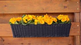 Jardin de ressort - fleurs jaunes banque de vidéos