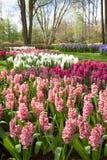 Jardin de ressort, Keukenhof Images stock
