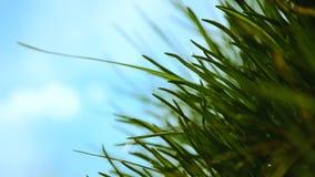 Jardin de ressort - lames d'herbe banque de vidéos