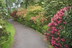 Jardin de rhododendron image libre de droits