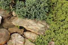 Jardin de roche Photographie stock libre de droits