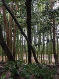 Jardin de roche, avec la voie d'eau en bambou Photo libre de droits