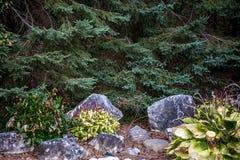 jardin de roche de Pin-aiguille Image libre de droits
