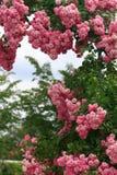Jardin de roses Photographie stock