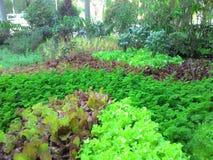 Jardin de salade photos libres de droits