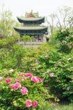 Jardin de source Photos stock
