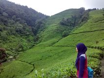 Jardin de thé chez Kaligua Images stock