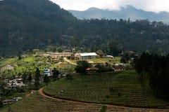 Jardin de thé dans Sri Lanka sous une pluie Image libre de droits