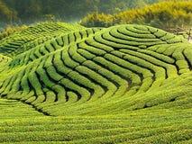 Jardin de thé de Gua de Ba dans Taiwan photo libre de droits