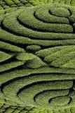 Jardin de thé de Gua de Ba dans Taiwan photographie stock