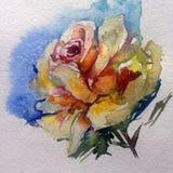 Jardin de thé rose de fleur colorée de fond d'art d'aquarelle illustration stock