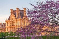Jardin de Tuileries au ressort, Paris, France Photo libre de droits