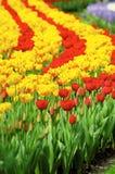 Jardin de tulipe Photo stock