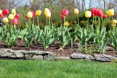 Jardin de tulipe photographie stock