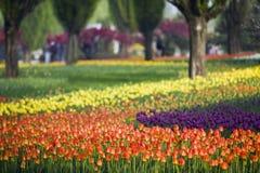 Jardin de tulipe Photos libres de droits