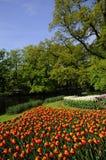 Jardin de tulipe photos stock