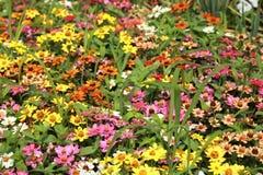 Jardin de variété images stock