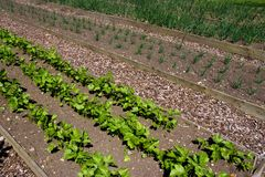 Jardin de Vegatable Image libre de droits