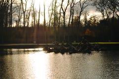 Jardin de Versailles Arkivbild