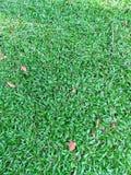 Jardin de vert d'herbe de backgroud de texture Photos stock
