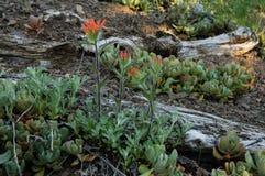 Jardin de Wildflower Images stock