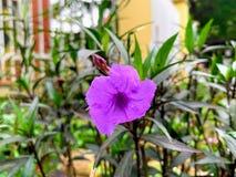 Jardin de wildflower de bord de la route - Hanoï, Vietnam le 26 mars 2019 images stock