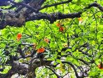 Jardin de Yuyuan à Changhaï, Chine image stock