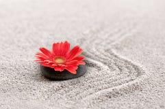 Jardin de zen avec la fleur rouge de gerbera Image stock