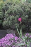 Jardin del EL del en de Flores Imagenes de archivo
