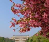 Jardin des Plantes, Parijs Stock Foto