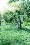 Jardin des pomme-arbres Photographie stock libre de droits