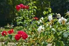 Jardin du De Haar Castle photo stock