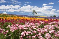 Jardin du Hokkaido Photos stock