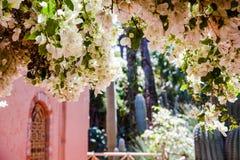 Jardin du Majorelle, Marrakech Images libres de droits