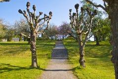 Jardin du manoir rouge (fleurissant en mai) Photographie stock libre de droits