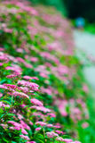 Jardin en été photos stock