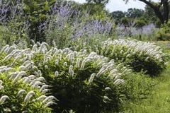 Jardin en été photos libres de droits