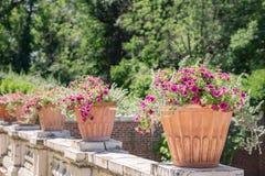 Jardin en été Images stock