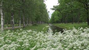 Jardin en été Les avenues des bouleaux et des chênes se développent le long du canal avec de l'eau Fleurs blanches dans le premie clips vidéos