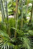 Jardin en bambou Image libre de droits