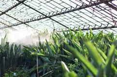 Jardin en serre chaude avec l'aloès vert photographie stock libre de droits