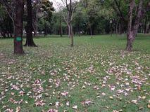 Jardin en Thaïlande Photo libre de droits