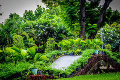 Jardin en Thaïlande Chatuchak 40 Photo stock
