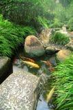 Jardin et étang japonais de Koi image stock