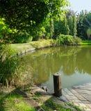 Jardin et étang tropicaux tranquilles et paisibles Image libre de droits